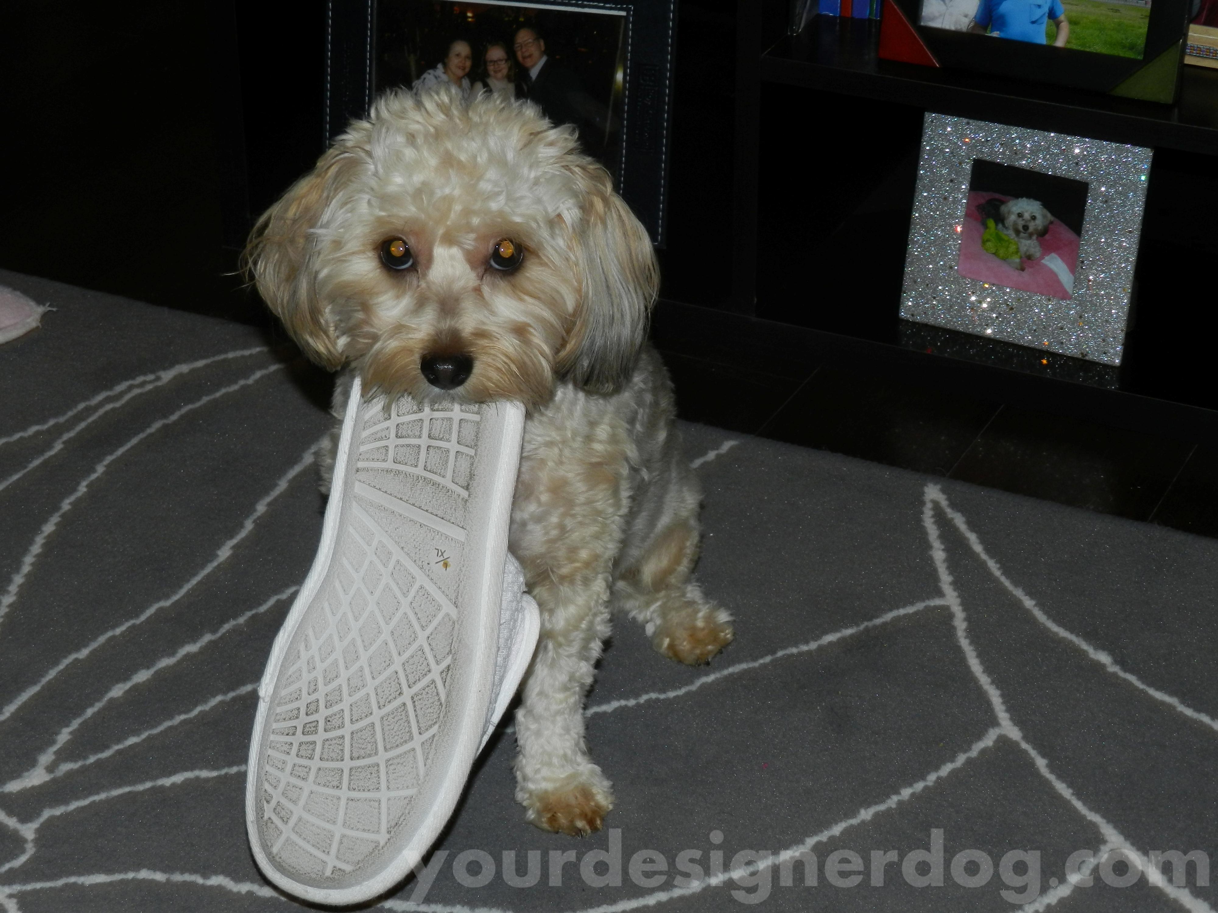 Sadie the Slipper Stealer