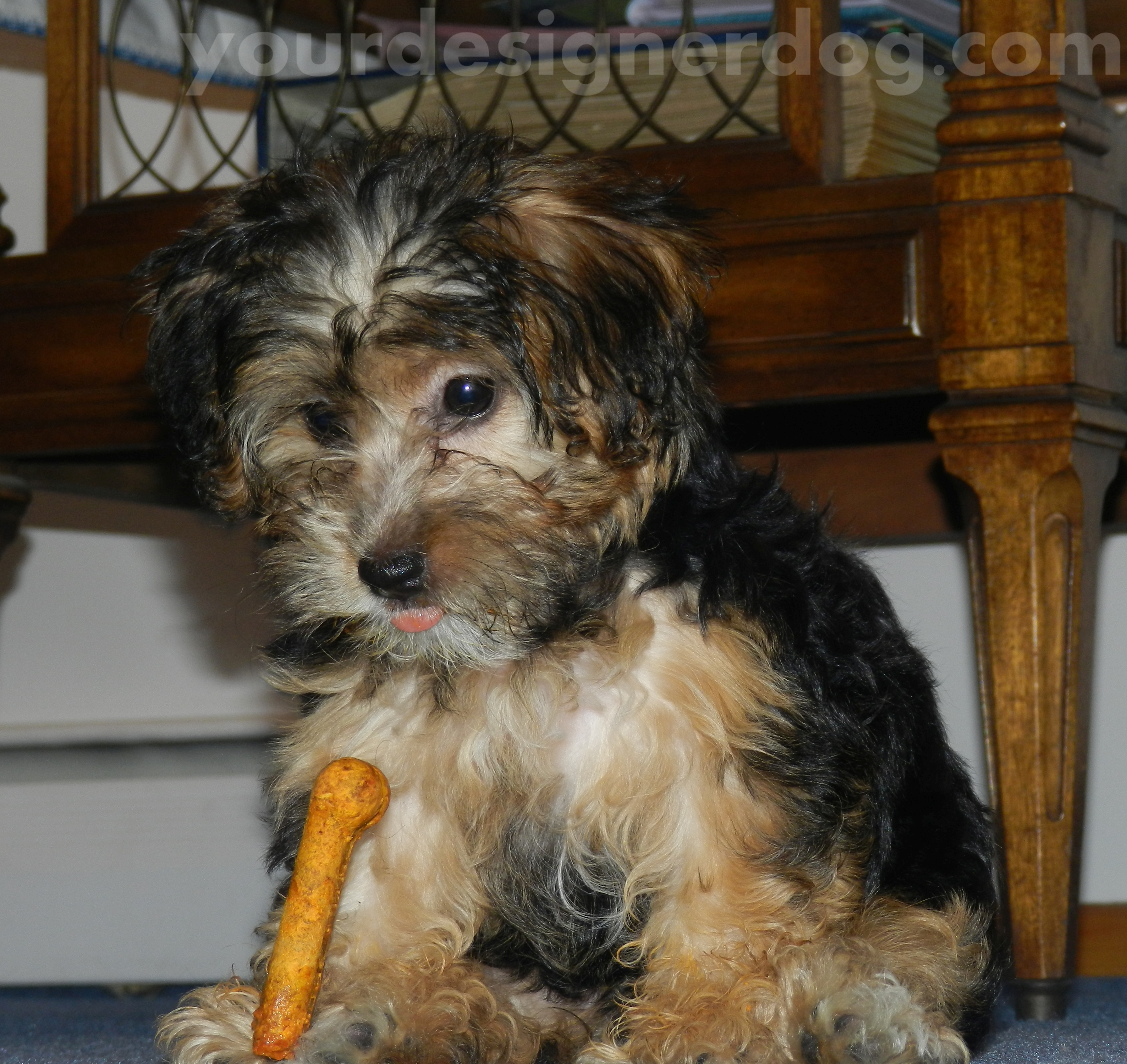 Sadie's First Dog Bone – Our First Tasty Tuesday!