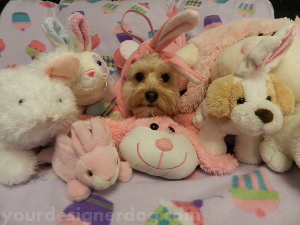 dogs, designer dogs, pets, bunny, stuffed animal, stuffie, rabbit, bunny, cute
