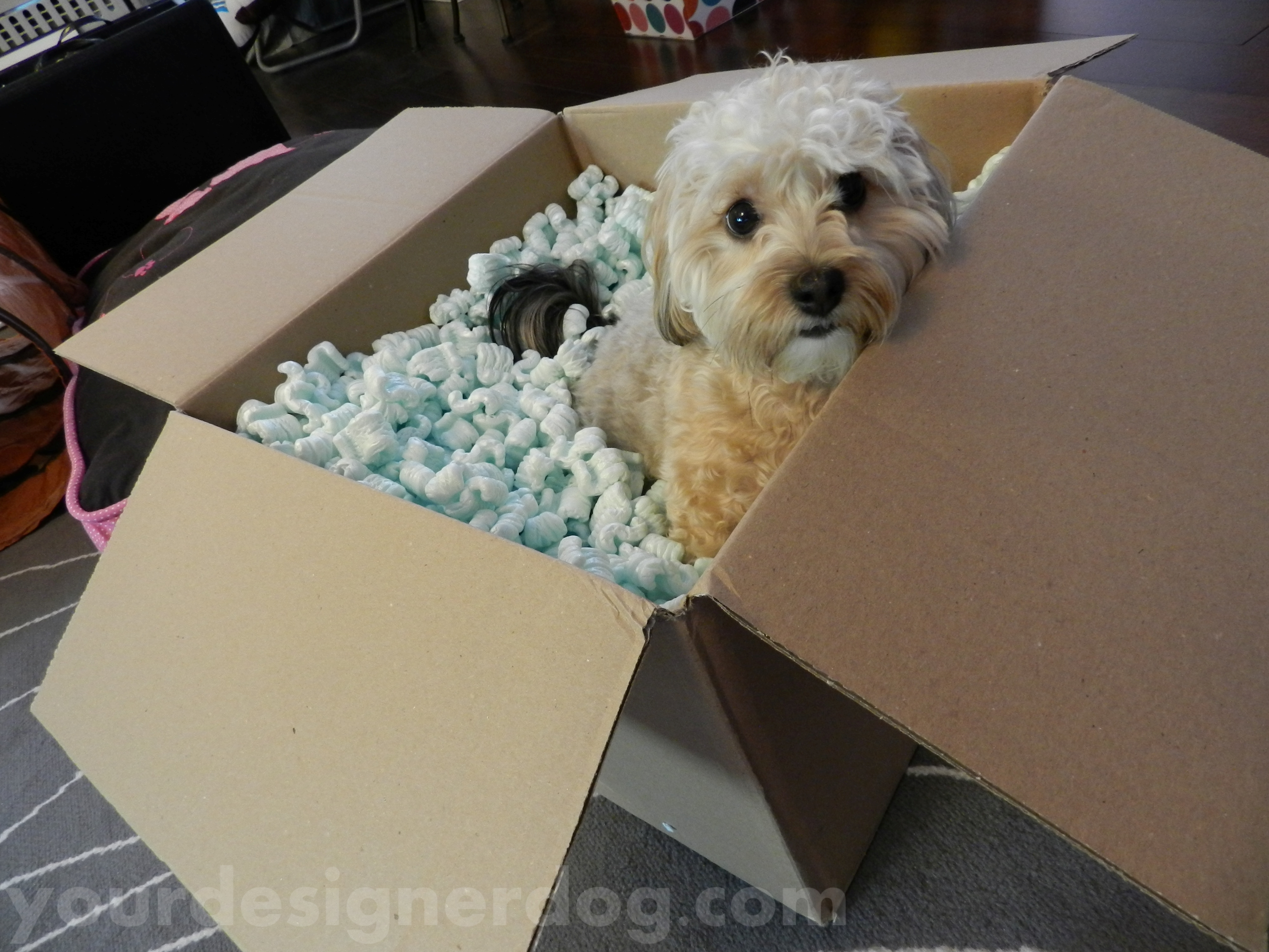 We're Moving! Meet us at www.yourdesignerdogblog.com!
