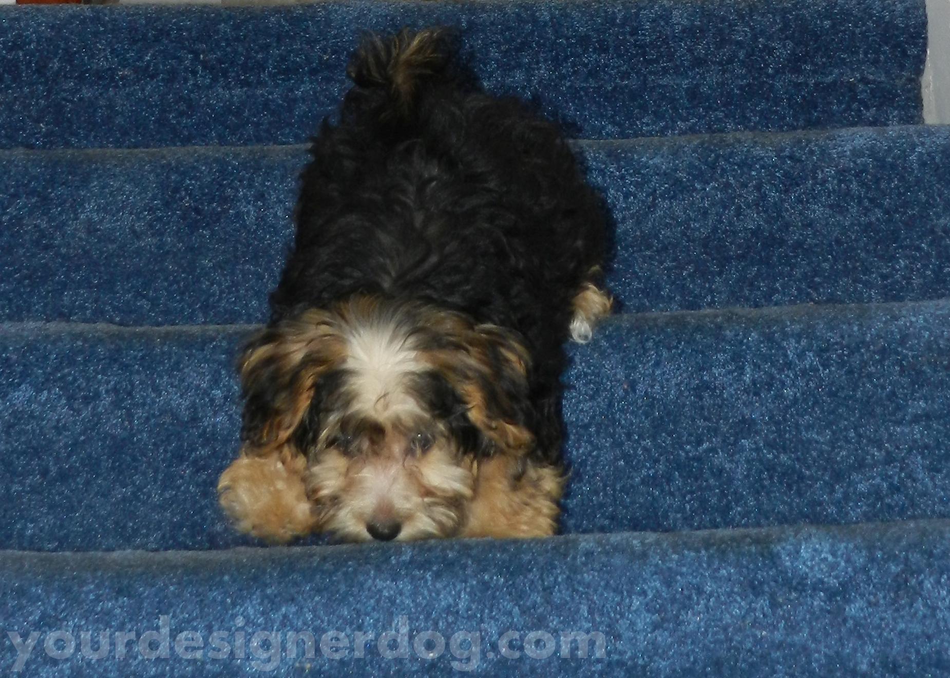 My Proud Puppy – Flashback Friday #3