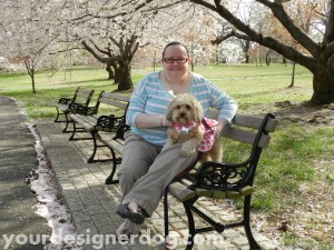 dogs, designer dogs, cherry blossoms, yorkipoo, yorkie poo