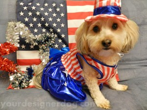 dogs, designer dogs, yorkipoo, yorkie poo, patriotic, fourth of july