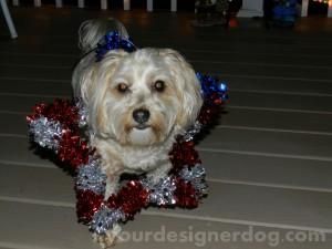 dogs, designer dogs, yorkipoo, yorkie poo, patriotic, memorial day