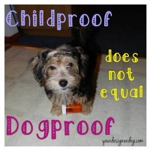 dogs, designer dogs, yorkipoo, yorkie poo, childproof, dogproof, medication, pill bottle
