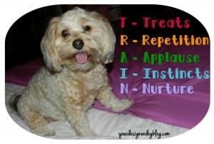 dogs, desogner dogs, yorkipoo, yorkie poo, dog training