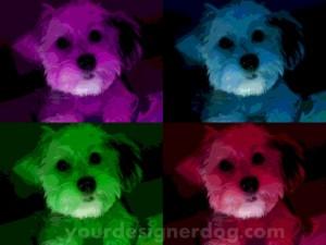 dogs, designer dogs, yorkipoo, yorkie poo, pop art, andy warhol