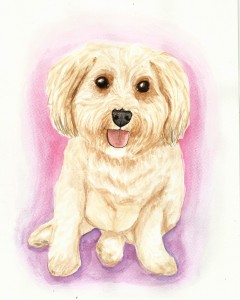 dogs, designer dogs, yorkipoo, yorkie poo, portrait, watercolor, painting