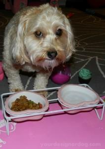 dogs, designer dogs, yorkipoo, yorkie poo, dog bowls