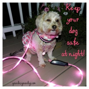 dogs, designer dogs, yorkipoo, yorkie poo, led leash, led collar, night walks