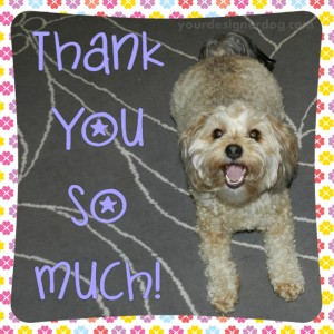 dogs, designer dogs, yorkipoo, yorkie poo, thank you