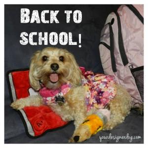 dogs, designer dogs, yorkipoo, yorkie poo, back to school, backpack, homework, teacher