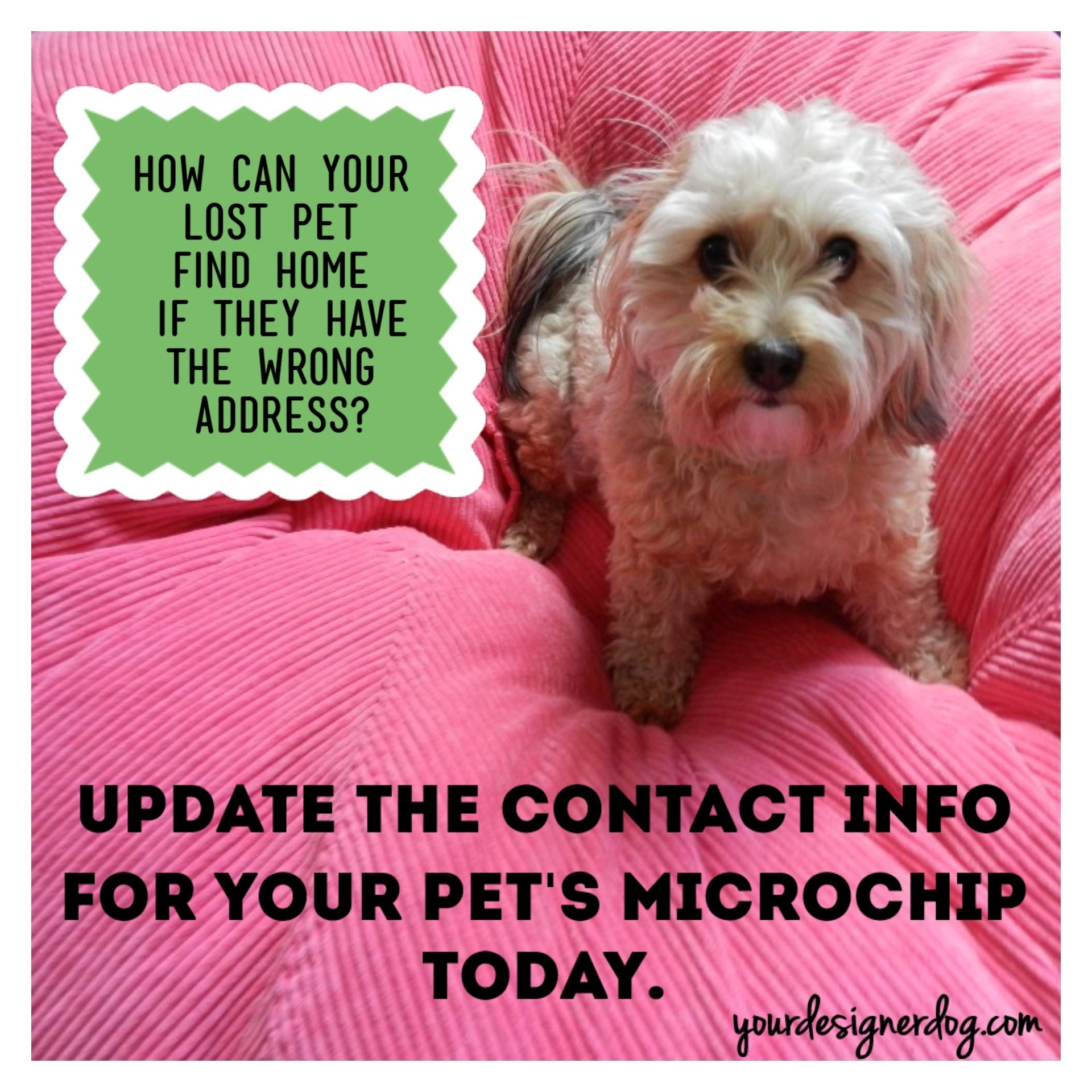 The Importance of Microchipping – It's National Check the Chip Day!