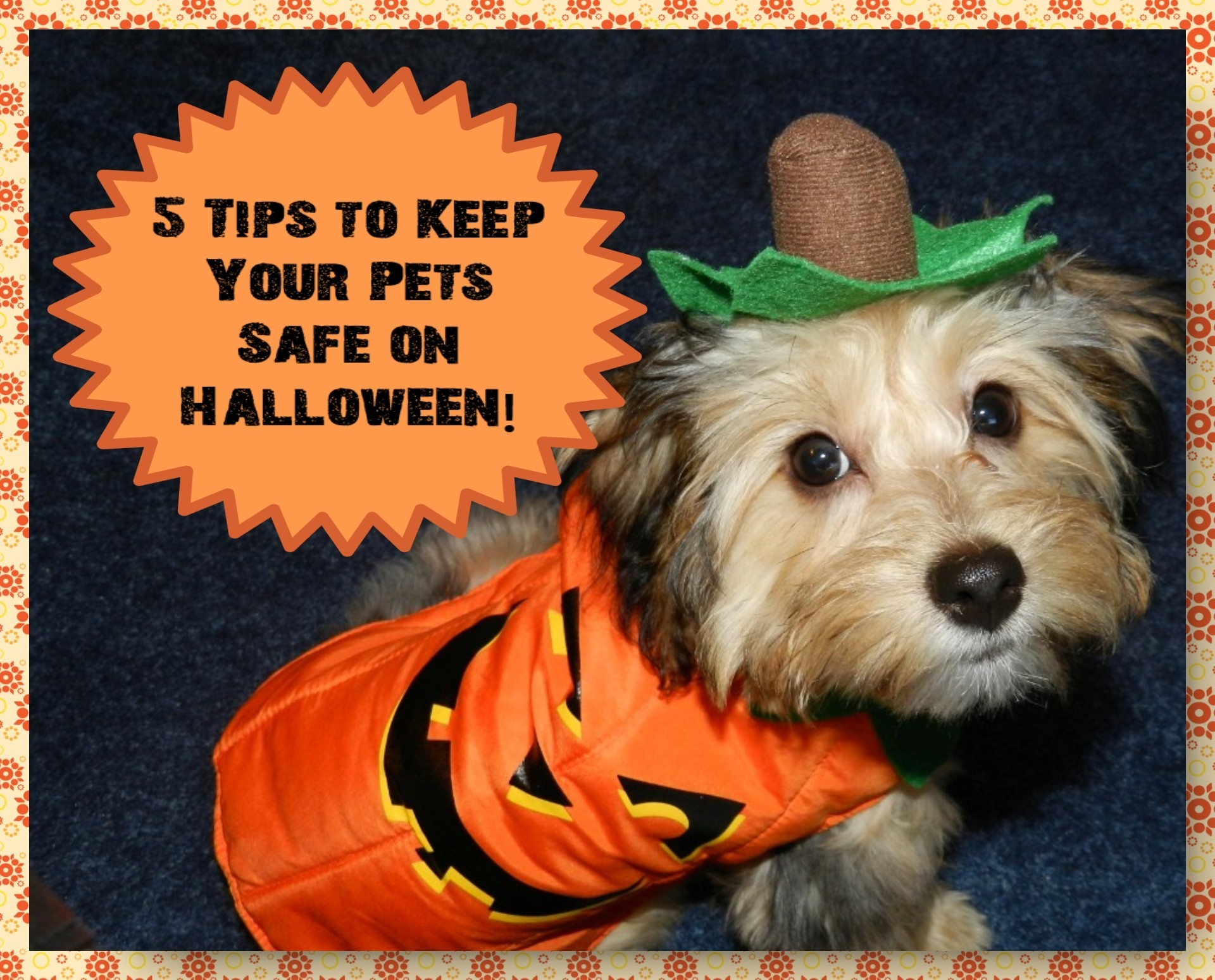 5 Tips to Keep Your Pets Safe on Halloween!