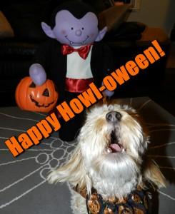 dogs, designer dogs, yorkipoo, yorkie poo, halloween, howl