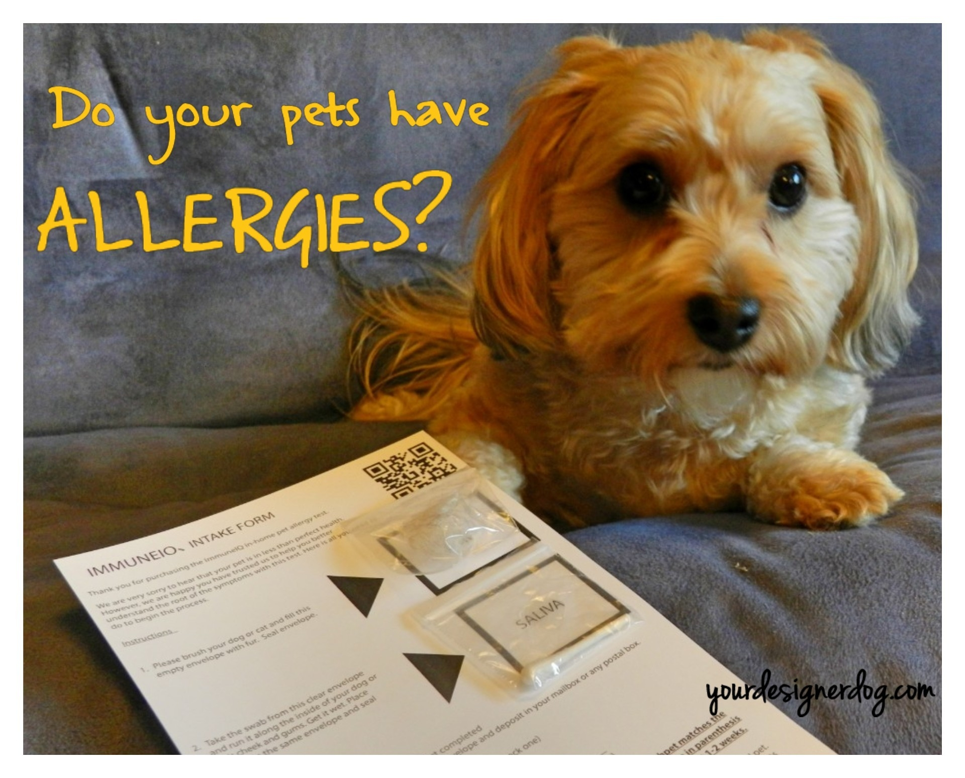 Do Your Pets Have Allergies? Find Out with ImmuneIQ!