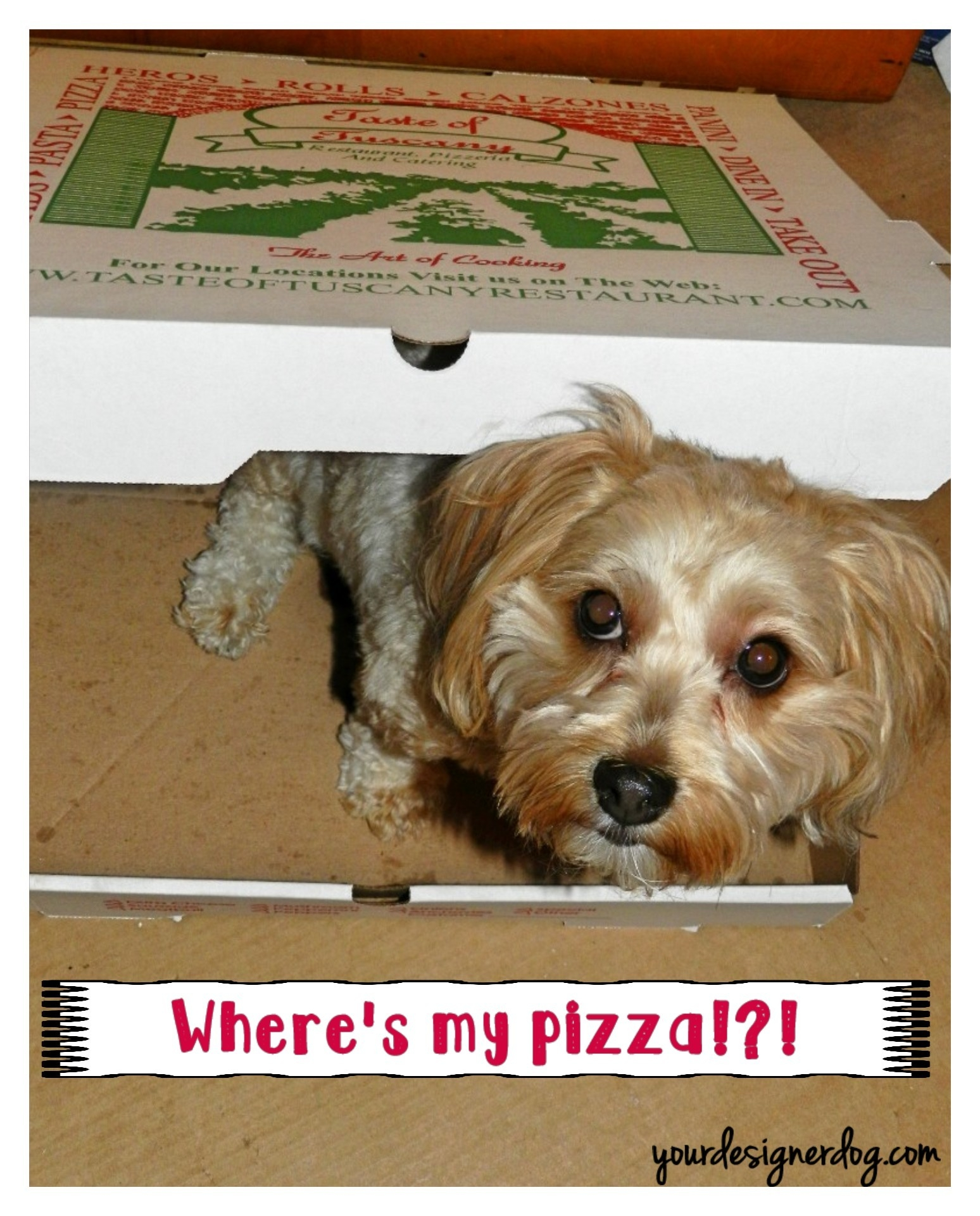 Where's My Pizza?!?