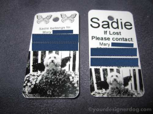 dogs, designer dogs, yorkipoo, yorkie poo, pet tags, dog tags, id tags