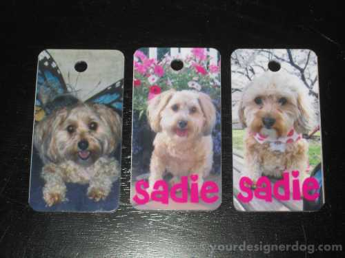 dogs, designer dogs, yorkipoo, yorkie poo, pets tags, dog tags, id tags
