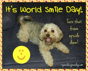 dogs, designer dogs, yorkipoo, yorkie poo, world smile day, dogs smiling