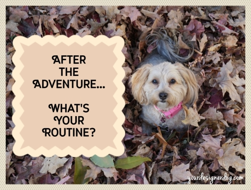 dogs, designer dogs, yorkipoo, yorkie poo, leaves, fall, adventure, routine