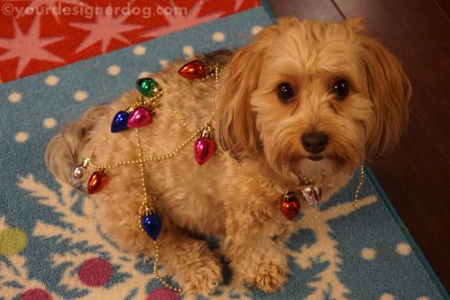dogs, designer dogs, yorkipoo, yorkie poo, decorations, christmas, garland, holiday