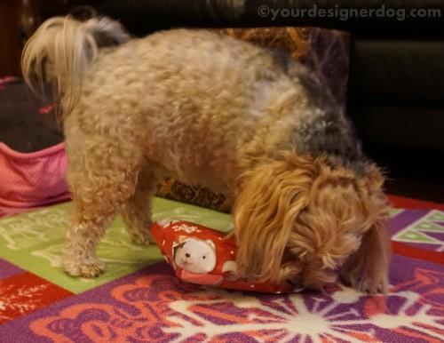 dogs, designer dogs, yorkipoo, yorkie poo, christmas, presents, christmas teee