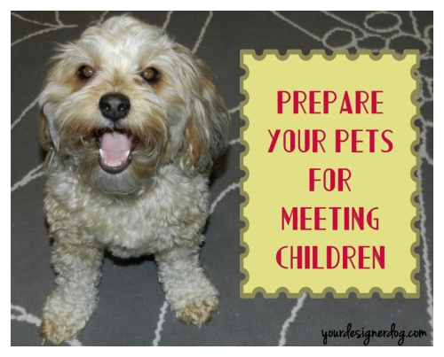 dogs, designer dogs, yorkipoo, yorkie poo, children, dog smiling, holiday