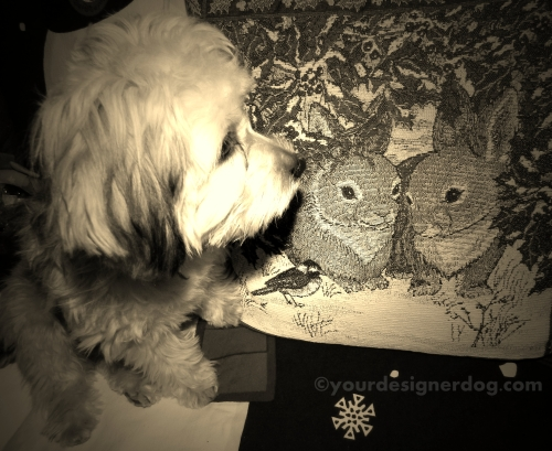 dogs, designer dogs, yorkipoo, yorkie poo, sepia photography, bunny, puppy, pillow