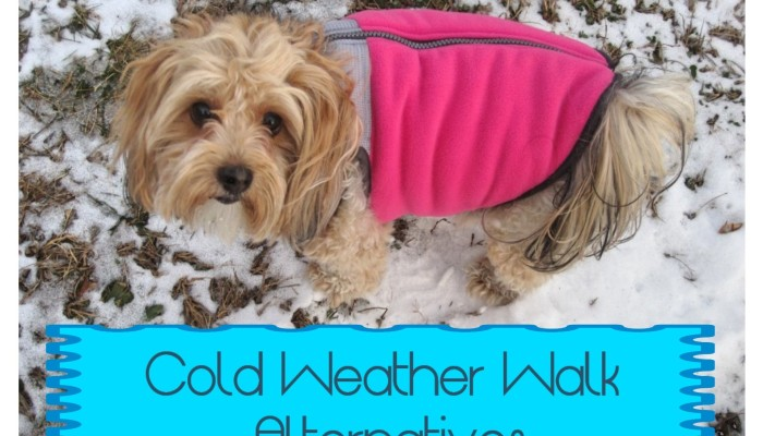 dogs, designer dogs, yorkipoo, yorkie poo, snow, cold weather