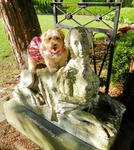 dogs, designer dogs, yorkipoo, yorkie poo, sphinx, statue