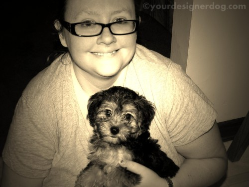 dogs, designer dogs, yorkipoo, yorkie poo, blogiversary, sepia photography, puppy