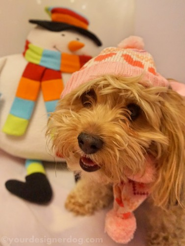 dogs, designer dogs, yorkipoo, yorkie poo, winter, snowman, knit hat, scarf, dog smiling