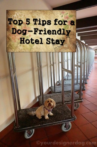 dogs, designer dogs, yorkipoo, yorkie poo, hotel, dog-friendly, luggage cart