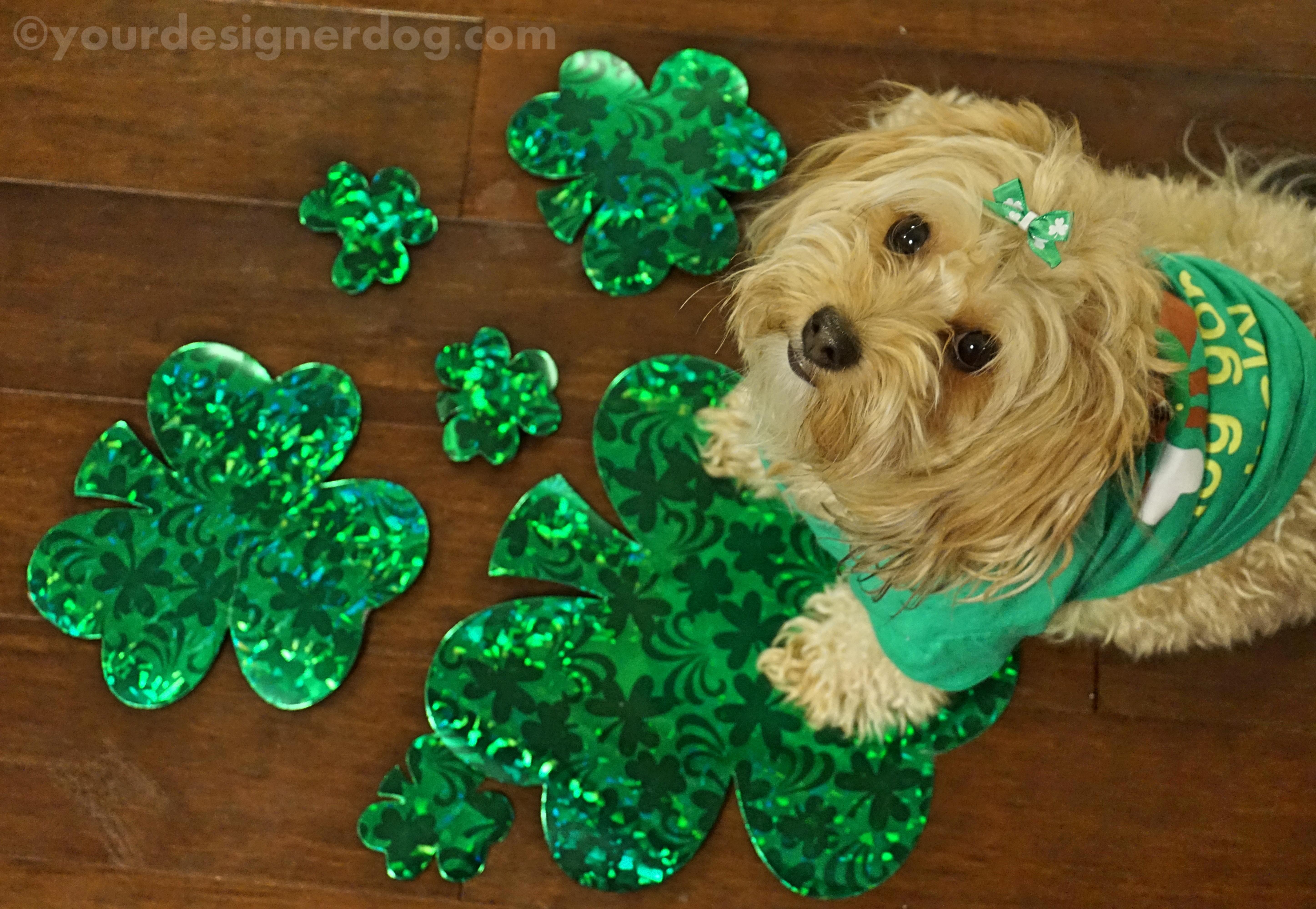 Happy St. Patrick's Day 2015!