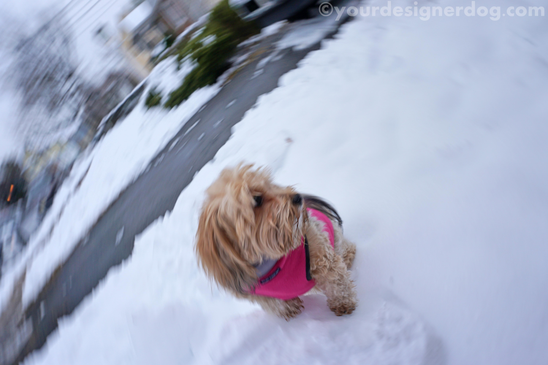 Winter Bloopers