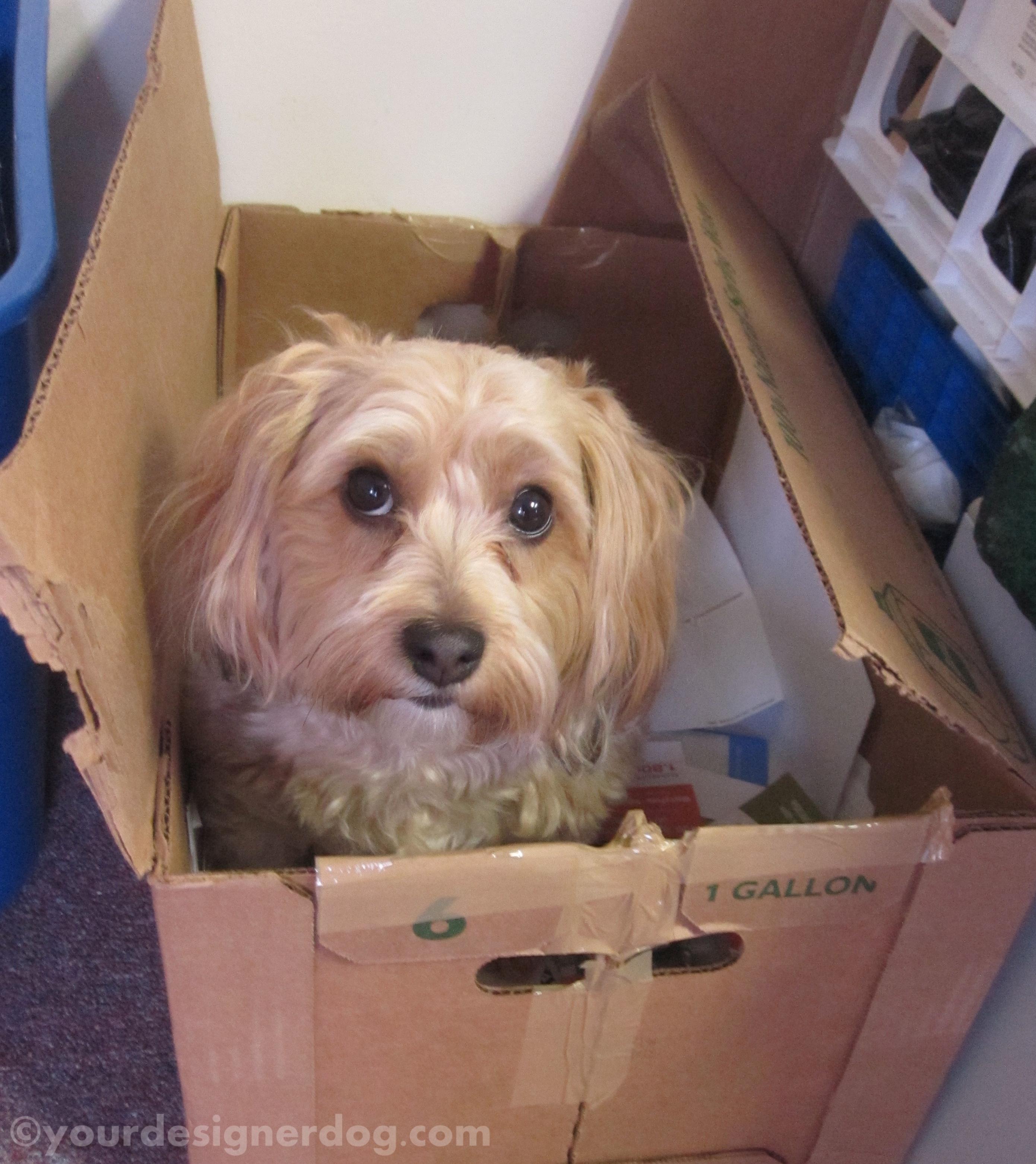Bones at Work – #DogProblems