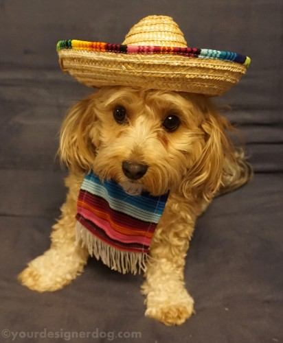 May The 4th Be With You Dog: It's Cinco De Mayo!