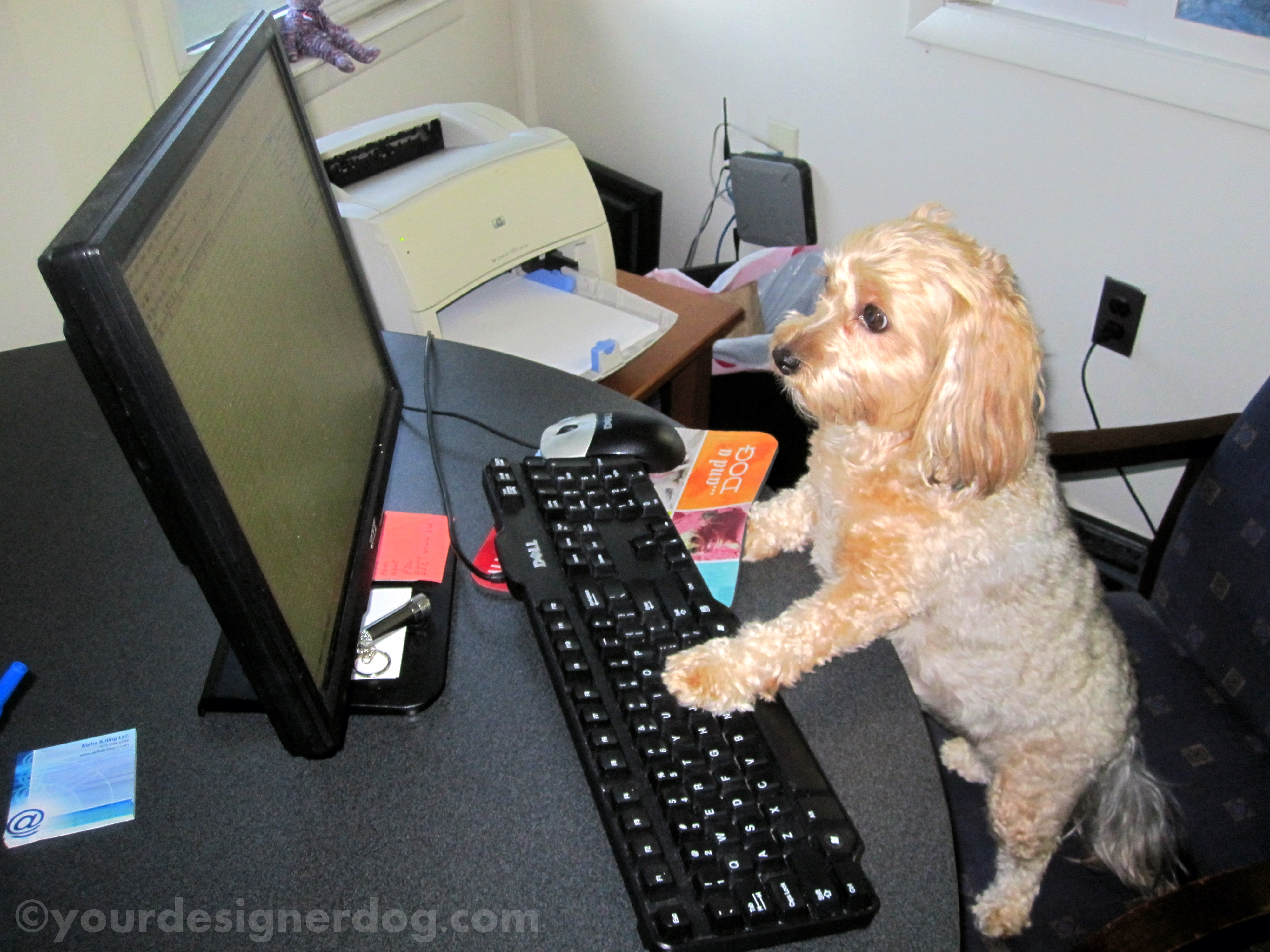 Dogs at Work – the Benefits vs the Complications