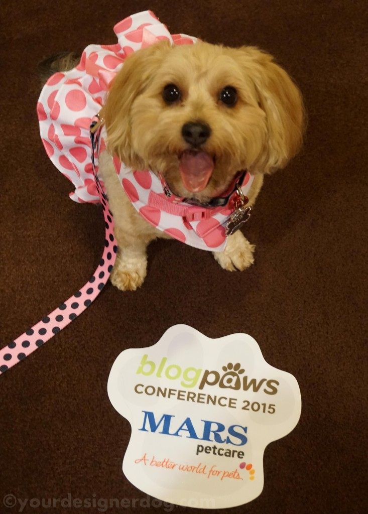 dogs, designer dogs, yorkipoo, yorkie poo, blogpaws, blogging conference