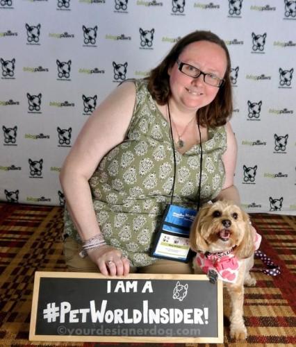 dogs, designer dogs, yorkipoo, yorkie poo, blogpaws, blogging conference