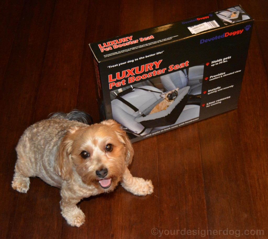 dogs, designer dogs, yorkipoo, yorkie poo, booster seat, car seat