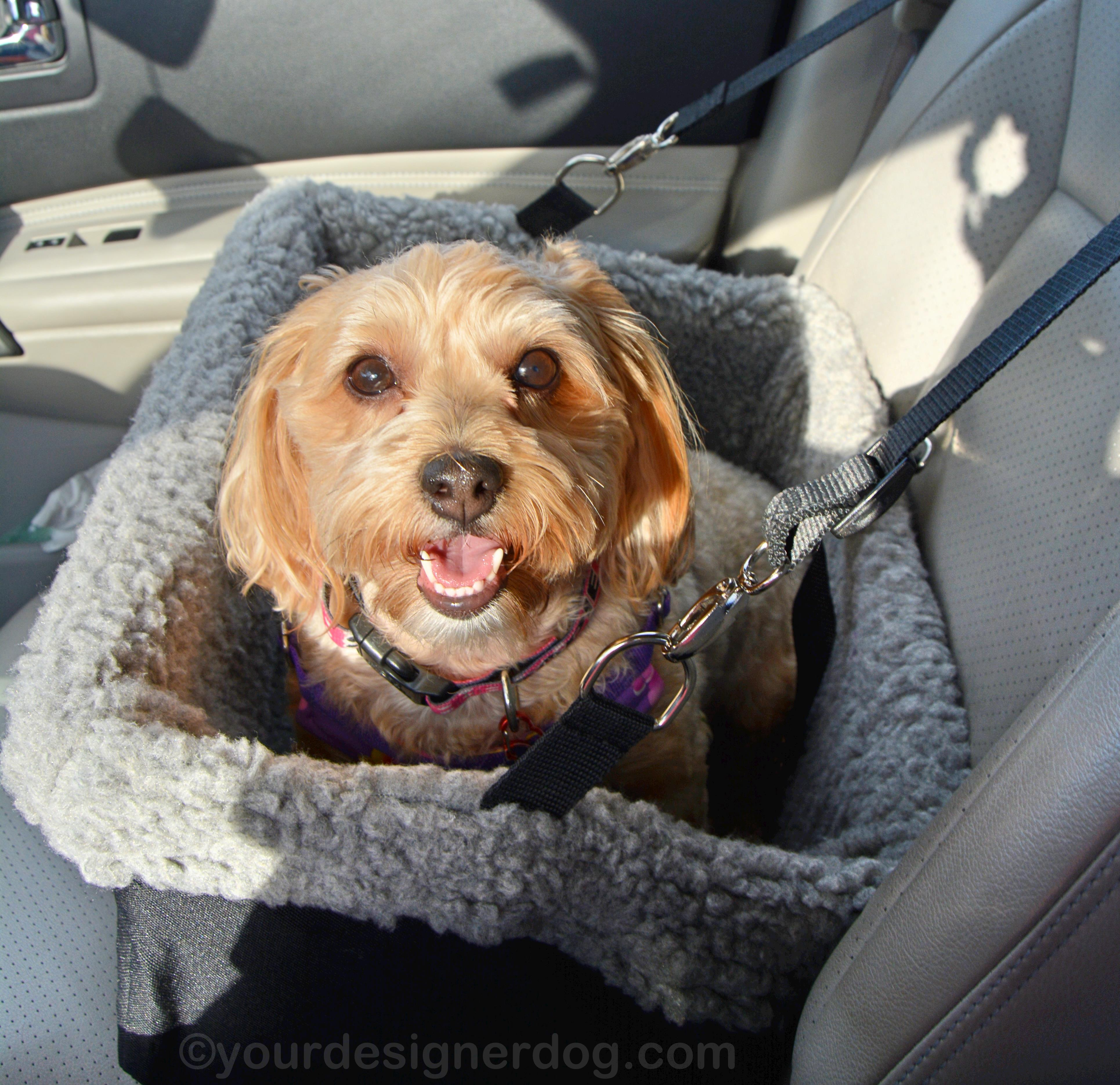 Car Safety Begins with a Booster Seat