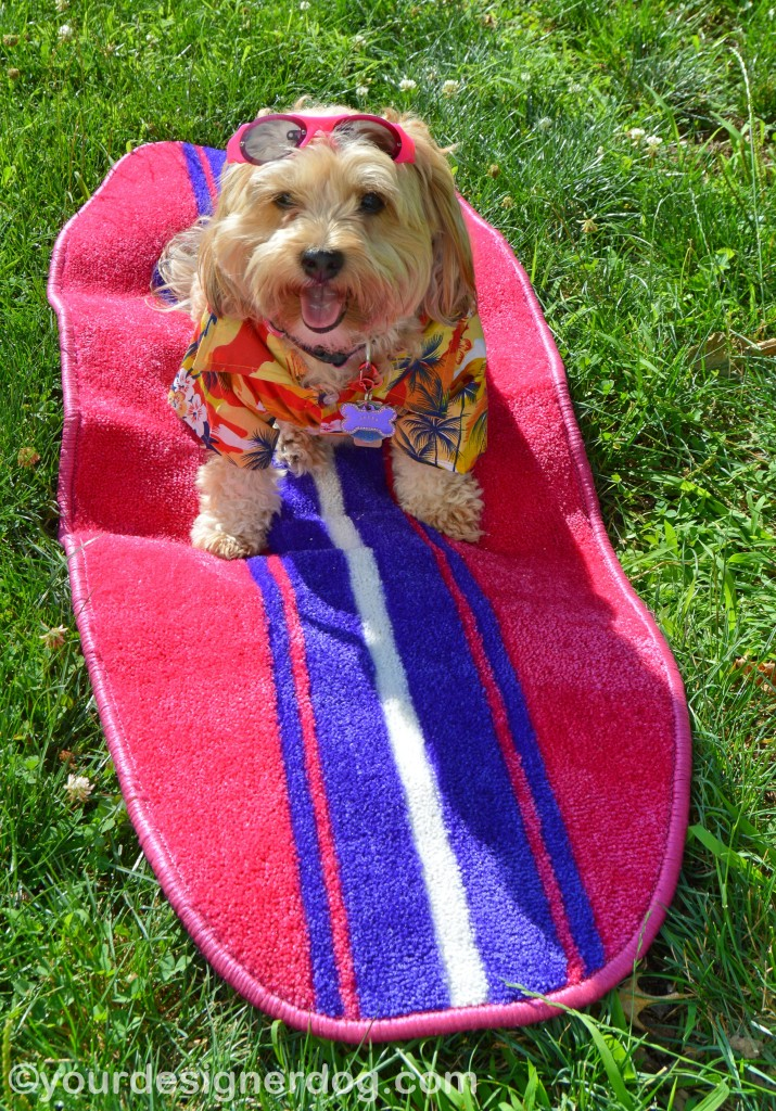 Sadie 39 S Summer Style From Micha Doggy Wear Yourdesignerdog: dog clothes design your own