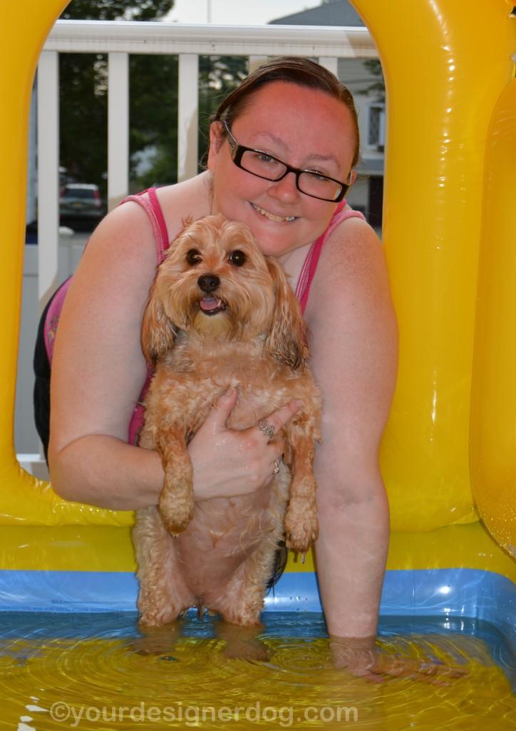 dogs, designer dogs, yorkipoo, yorkie poo, dog house, pool