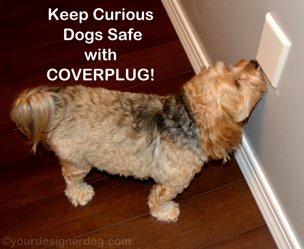 dogs, designer dogs, yorkipoo, yorkie poo, childproofing, outlet cover, coverplug