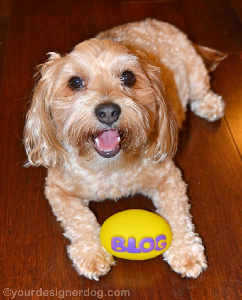 dogs, designer dogs, yorkipoo, yorkie poo, dog toy, toy blog
