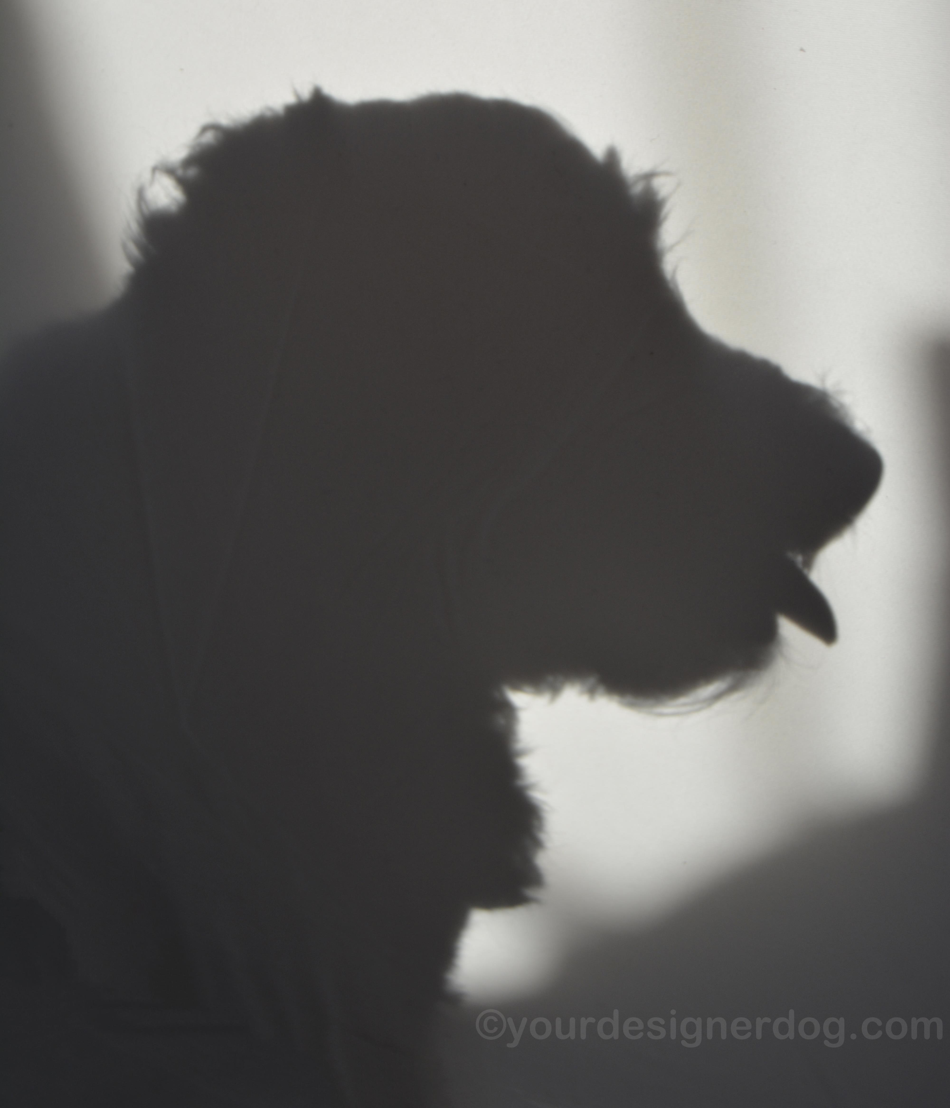 Shadow – #52Snapshots
