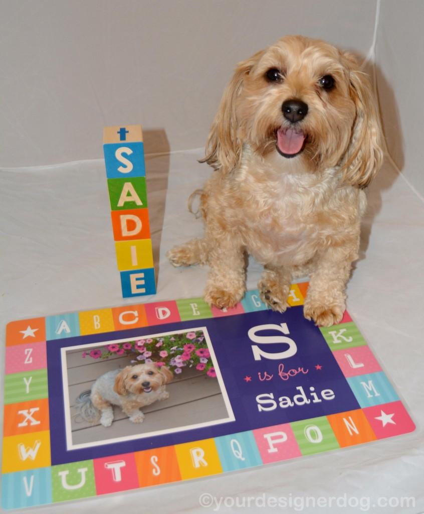 dogs, designer dogs, yorkipoo, yorkie poo, blocks, alphabet