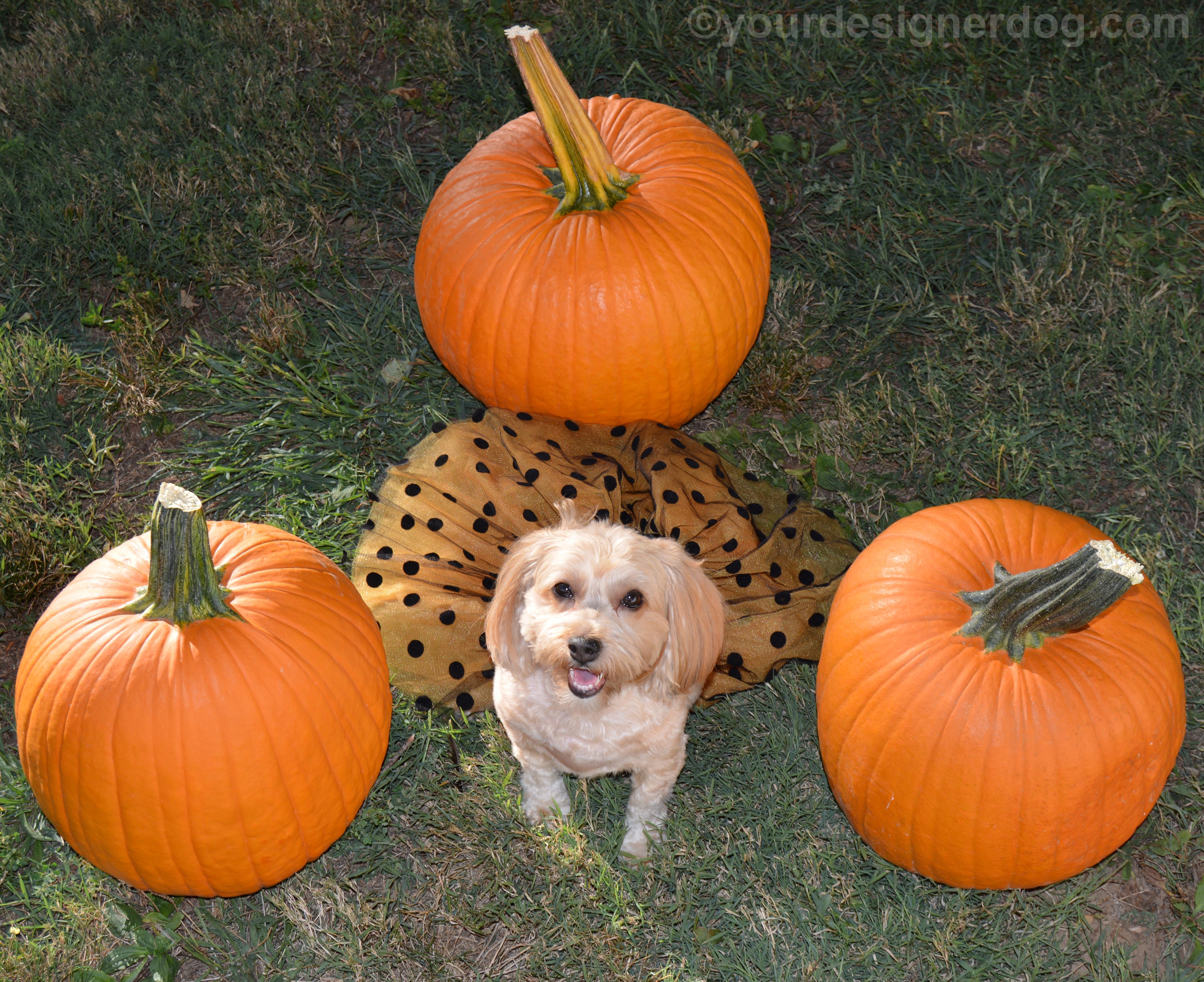 Polka Dots and Pumpkins